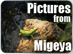 pictures_from_migeya.png